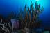 House Reef Scenic