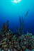 Trumpetfish Scenic