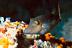 Sharpnose Puffer