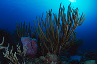 House Reef Scenic