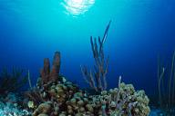 Trumpetfish Scenic