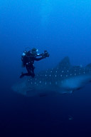 Whaleshark and Mike