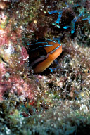 Ewa Blenny