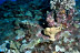 Frogfish and Lionfish