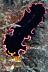 Pseudobiceros gloriosus Flatworm