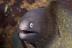 White Eyed Eel