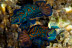 Fighting Male Mandarinfish