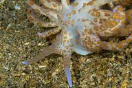 Solar Powered Nudibranch