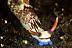 Nembrotha lineolata Nudibranch