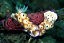 Risbecia Tryoni Nudibranchs with Eggs