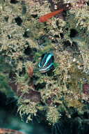 Ewa Blenny and Friend