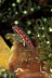 Neon Triplefin