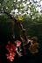 Mangroves Scenic