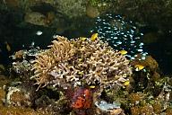 Reef Scene at the Mangroves