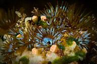 Undersea Flowers