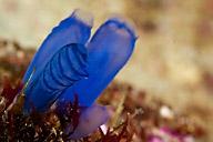 Tunicates