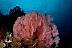 Reef Scenic