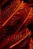 Crinoid Detail