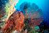 Gorgonian Scenic