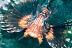 Grandpa Lionfish