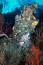 Lionfish Scenic