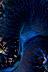 Tridacna Mantle