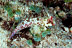 Moyer&#039;s Dragonet