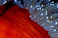 Anemone detail