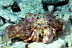 Anemone Hermit Crab